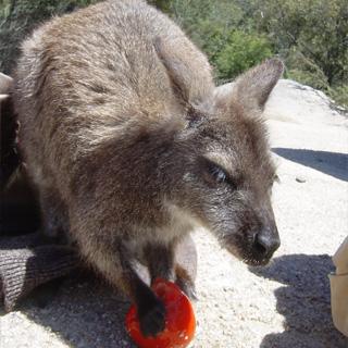カップル旅行-オーストラリア2