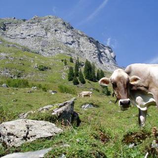 カップル旅行-スイス